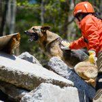 災害救助犬に認定される犬種とは!?警察犬や牧羊犬が多いのか?